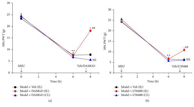 Effect of local administration of specific μ - and κ -opioid receptor agonists on mechanical hyperalgesia of MSU-induced acute gout arthritis rats. Opioid receptor agonists were locally administered to the ankle 7.5 h after MSU injection. PWTs were evaluated 30 min after opioid receptor application. (a-b) Effects of μ -receptor agonist DAMGO (4.9 μ g/ankle, panel (a)) and κ -receptor agonist (±) U50488 (1 μ g/ankle, panel (b)) injected (i.a.) into the ankle either ipsi (IL) or contralaterally (CL) on the mechanical hyperalgesia of MSU-induced acute gout arthritis rats. ∗∗ p