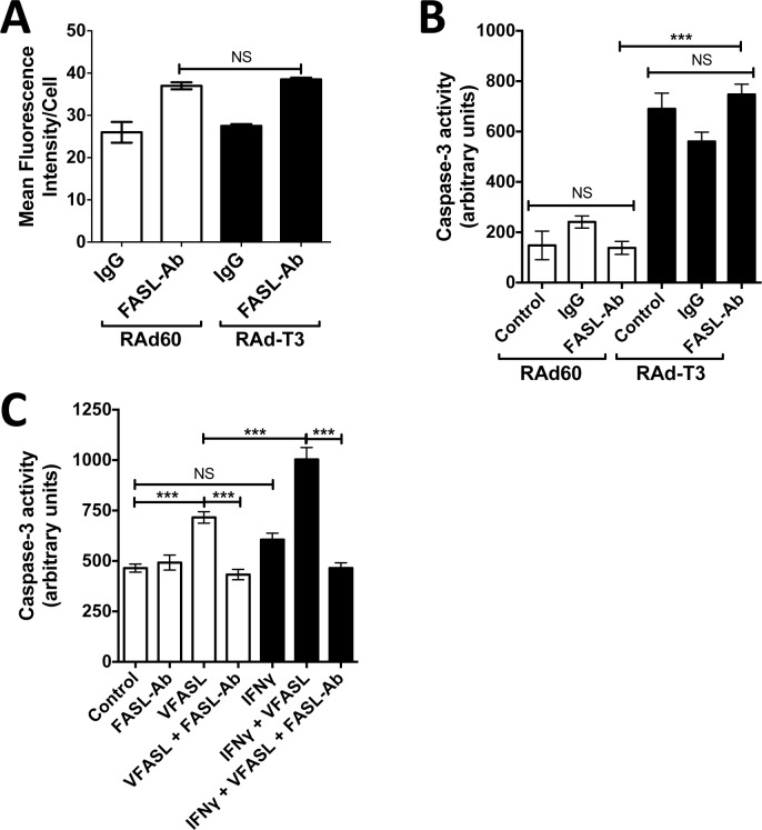 TIMP-3 induced apoptosis shows independence of FASL. A. hVSMCs were transduced with control adenovirus (RAd60) or adenovirus expressing TIMP-3 (RAdT3) for 48 h before staining with 2 μg ml -1 isotype control IgG or an anti-FASL antibody and an anti-IgG Alexfluor488 conjugate. Cell-surface alexafluor488 mean fluorescence staining intensity was measured using flowcytometry. Data is the mean ± SEM, n = 3. NS = Not Significant. B. hVSMCs were transduced with control adenovirus (RAd60) or adenovirus expressing TIMP-3 (RAdT3) for 16 h before the addition of PBS (vehicle control), 2 μg ml -1 isotype control IgG or a function blocking anti-FASL antibody. The antibody was added every 24 h before cell lysates were harvested 72 h post adenoviral transduction and <t>caspase-3</t> activity measured. Data is the mean ± SEM, n = 3. *** = P