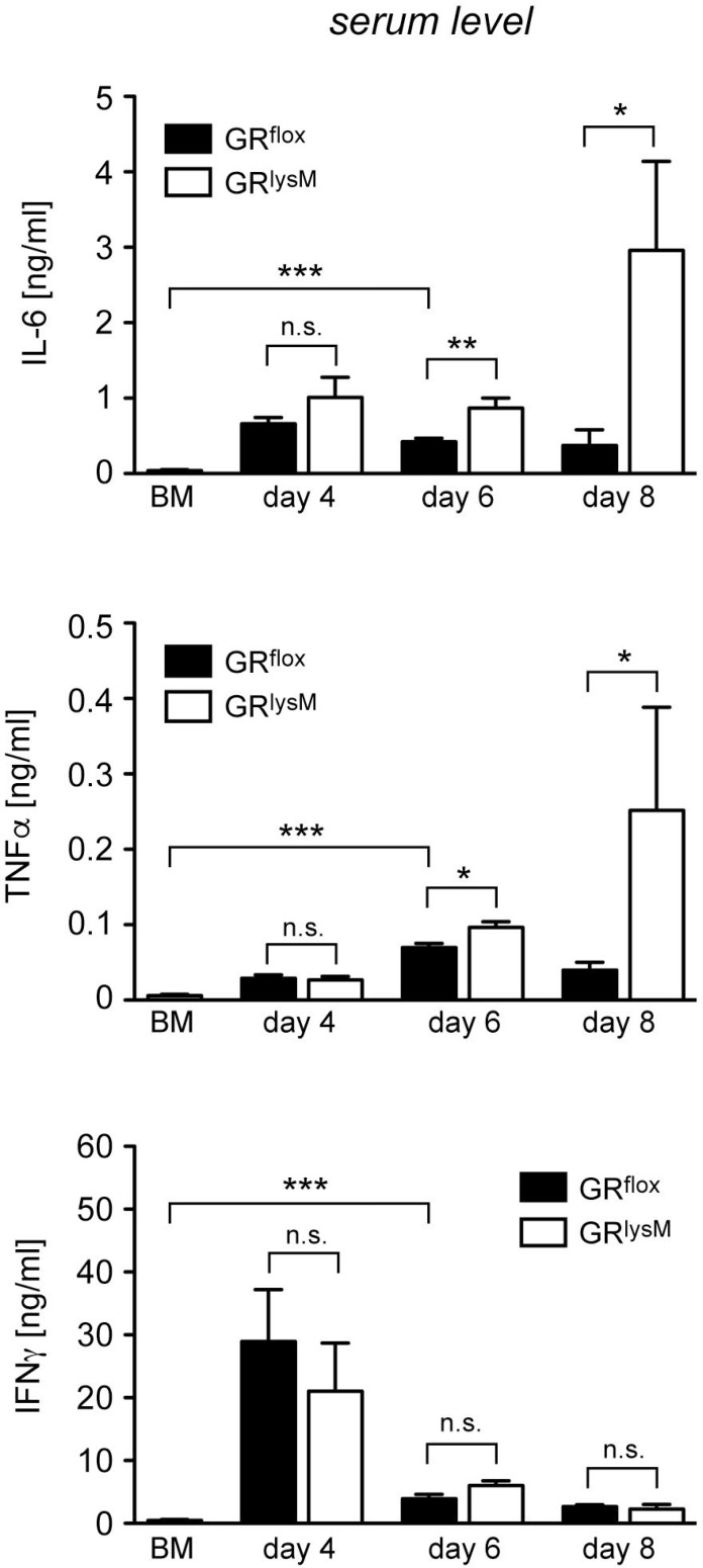 Cytokine serum levels in the early phase of aGvHD in the GR lysM model GR flox and GR lysM BALB/c mice were transplanted with BM and purified T cells from C57BL/6 wildtype mice; transfer of BM cells only served as a control. Mice were sacrificed and analyzed on day 4, 6 and 8 after aGvHD induction; analysis of BM controls was performed on day 6. Serum levels of IL-6, TNFα and IFNγ were determined by ELISA and are depicted as mean values ± SEM. N = 12 (BM), N = 5/5 (GR flox /GR lysM ; day 4), N = 27/28 (GR flox /GR lysM ; day 6), N = 6/7 (GR flox /GR lysM ; day 8); data pooled from multiple experiments. Statistical analyses were performed by Mann-Whitney U test ( * p