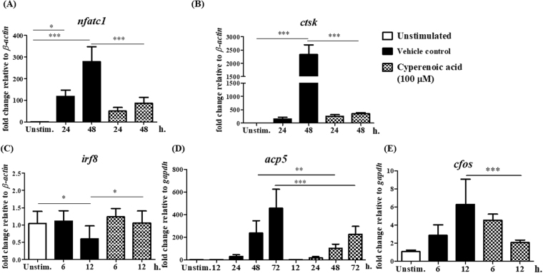 Effect of cyperenoic acid on expression of osteoclast-related genes. BMs were pre-treated with M-CSF with DMSO and left unstimulated (open bars), M-CSF with DMSO for 30 min, followed by RANKL stimulation (closed bars) or M-CSF with cyperenoic acid (100 µM) for 30 min, followed by RANKL stimulation (hatched bars) for indicated times. Total RNA was extracted and subjected to RT-qPCR. Osteoclast-related genes were nfatc1 ( A ), ctsk ( B ), irf8 ( C ), acp5 ( D ) and cfos ( E ). The data are representative of three independent experiments and presented as the mean ± S.D. *** p