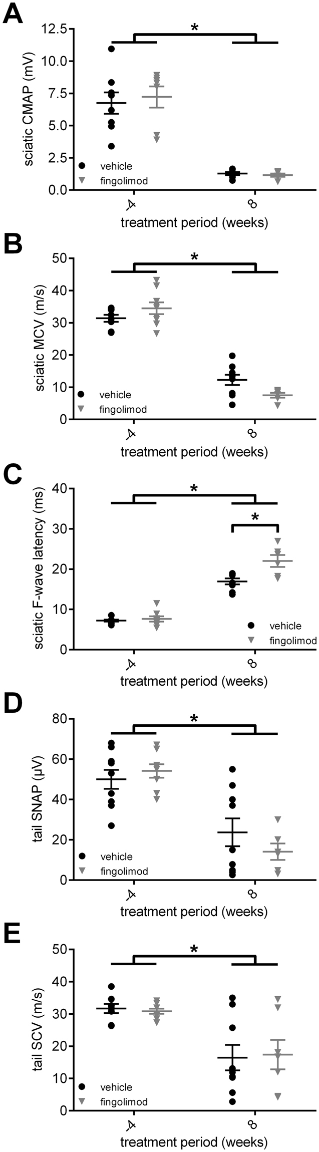 Electrophysiological characteristics of <t>fingolimod</t> treatment in CD86 −/− NOD mice. ( A ) The compound motor action potential amplitude (CMAP) of the sciatic nerve declined similarly in both fingolimod and vehicle treated CD86 −/− NOD mice. ( B ) Motor fibers showed electrophysiological signs of demyelination indicated by the decrease of motor nerve conduction velocity (MCV), which was more pronounced in the fingolimod treated mice compared to vehicle treatment. ( C ) F-wave latency increased in both groups with disease progression. Again, fingolimod treated mice were more affected than mice in the vehicle group. Similar to motor fibers, the ( D ) sensory nerve action potential amplitude (SNAP) and ( E ) sensory nerve conduction velocity (SCV) declined in both treatment groups. Statistical analysis: ( A ) Kruskall-Wallis test with Dunn's method, ( B – E ) 2-way ANOVA with Sidak post hoc, group sizes: n = 10 (vehicle), n = 9–10 (fingolimod). *p ≤ 0.05, ns: not significant.