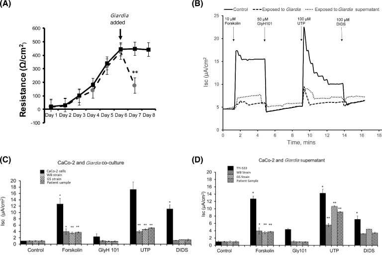 The effect of co-culture with Giardia or Giardia supernatants on the electrophysiological properties of CaCo-2 monolayers. (A) Transepithelial electrical resistance in CaCo-2 monolayers following seeding on permeable supports. Data show an increase in TEER as the monolayer develops. Confluence occurred around day 6. Giardia were added on day 6 after the confluent monolayer formed and co-cultured with the Caco-2 monolayer for 24 hours. TEER was measured after 24 hours and compared with TEER in monolayers that had not been exposed to Giardia (n = 6). (B) A representative short circuit current (Isc) against time recording from single monolayers of CaCo-2 cells in an Ussing chamber. The trace shows the activation of CFTR chloride channels (basolateral application of 10 μM of forskolin) and calcium-activated chloride channels (basolateral application of 100 μM of UTP). Specificity of activation is confirmed by inhibition of Isc by the specific CFTR channel blocker, GlyH101; and specific calcium-activated chloride channel blocker, DIDS. The effect on Isc of 24-hour co-incubation of CaCo-2 monolayers with Giardia or with Giardia supernatant (1:1000 dilution) is also shown. (C) Effect of 24-hour co-incubation of CaCo-2 monolayers with different strains of Giardia (WB, GS, and patient samples) on forskolin-stimulated and UTP-stimulated Isc (n = 3). (D) Effect of supernatant co-incubation from different strains of Giardia (WB, GS, and patient samples) on forskolin-stimulated and UTP-stimulated Isc (n = 3) from Caco-2 monolayers. The results were analysed by the Student t test and expressed as mean values ± standard error mean (SEM). Significant difference expressed as * P