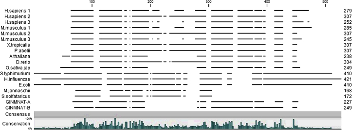Multiple sequence alignment of 16 homologous NMNAT proteins from phylogenetically divergent organisms with GlNMNAT isoenzymes . The percentage of conservation is displayed throughout the sequence in bars. Alignment was done with the ClustalO algorithm in the CLC Sequence Viewer v7.0.2 program (CLCBio A/S, Additional Alignments plugin v.1.5.1).
