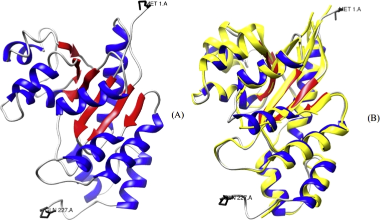 GlNMNAT tertiary structure model . (A) Three-dimensional GlNMNAT model (I-TASSER [15] , [16] ). A Rossmann-type fold, characteristic of nucleotide-binding proteins, is observed. C-score: −5
