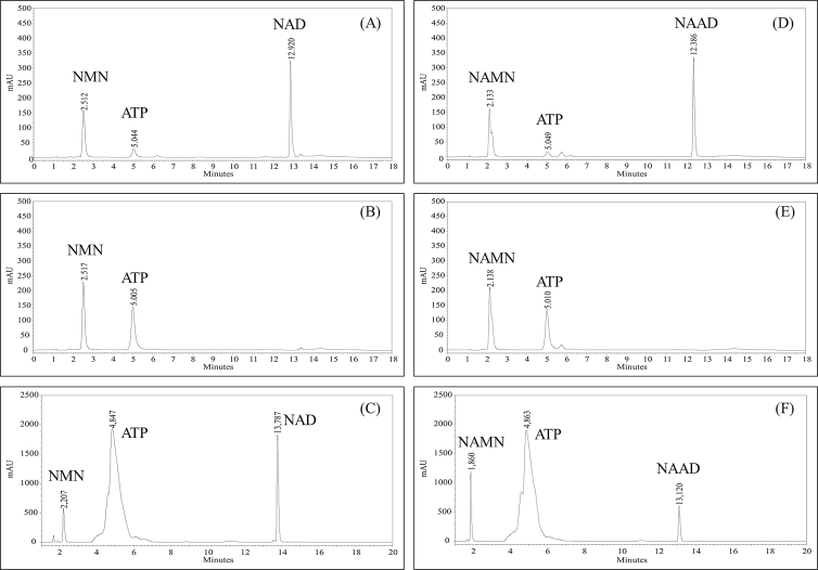 Results of a direct enzyme assay using nicotinamide mononucleotide (NMN) or nicotinic acid mononucleotide (NAMN) as a substrate. NMN: (A) Positive control (B) Negative control (C) Reaction mixture with His-GlNMNAT. NAMN: (D) Positive control (E) Negative control (F) Reaction mixture with His-GlNMNAT.