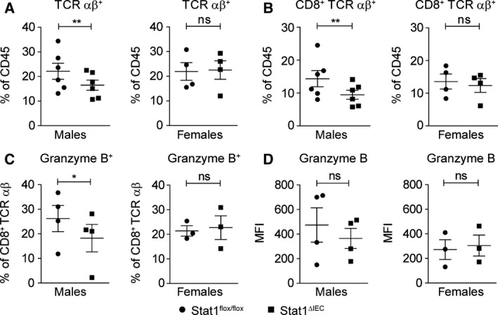 Epithelial STAT1 is a sex‐specific promoter of intraepithelial CD8 + T‐cell infiltration in acute colitis. (A–C) Flow cytometry data for intraepithelial infiltration of TCRαß + T cells (A), CD8 + TCRαß + T cells (B), and CD8 + TCRαß + granzyme B + T cells (C) into the mucosa of male and female STAT1 flox/flox and STAT1 ∆IEC mice during DSS‐induced acute colitis. Each data point represents a biological replicate with cells pooled from three mice. (D) Mean fluorescence intensity for granzyme B expression in intraepithelial CD8 + T cells during DSS‐induced acute colitis. Each data point represents a biological replicate with cells pooled from three mice. ns: not significant.