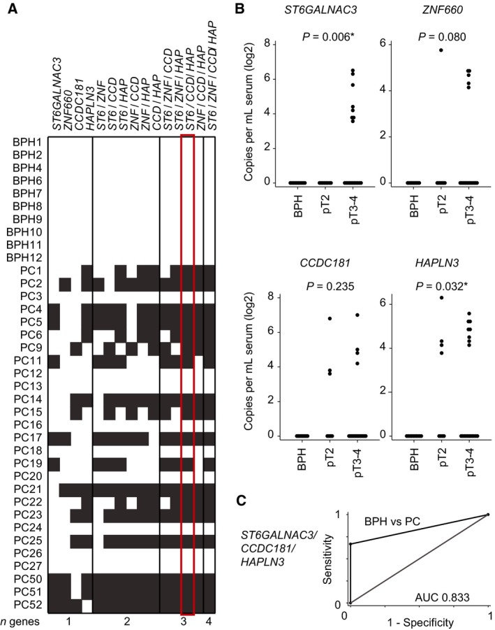 Promoter methylation in cf <t>DNA</t> from serum. (A) Heatmap of promoter methylation detected in cf DNA extracted from serum samples for single genes and combinations of genes. White: no methylation detected; gray: methylation detected; red box: best minimal combination of markers (highest AUC ). (B) Copies per mL of hypermethylated ST 6 GALNAC 3 , ZNF 660 , CCDC 181 , and HAPLN 3 in serum samples from 10 patients with BPH and 27 patients with PC analyzed by droplet digital <t>PCR</t> . P ‐values for trend of methylation in BPH