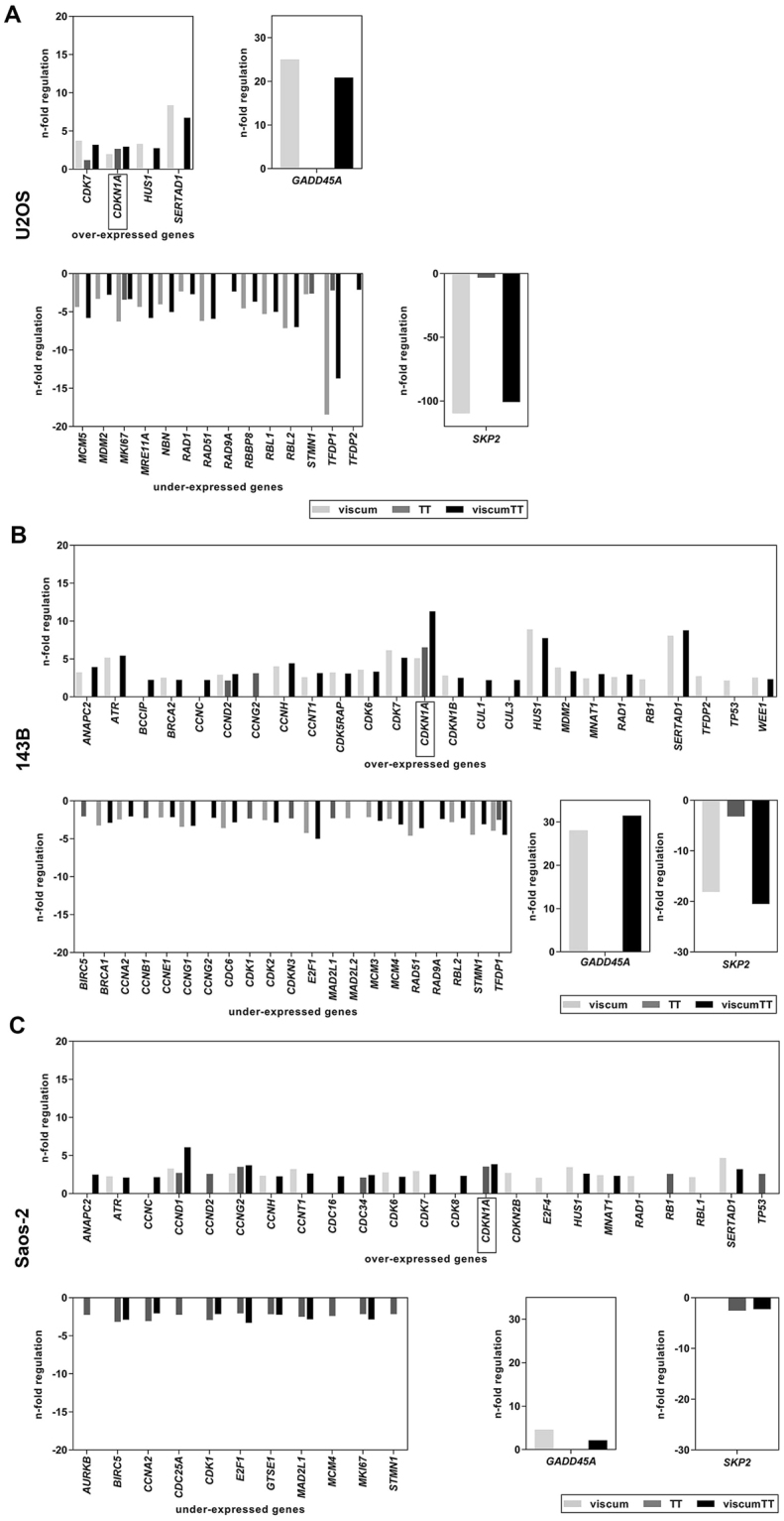 Viscum, TT and viscumTT alter cell cycle-related genes. Expression of cell cycle-related genes of U2OS ( A ), 143B ( B ), Saos-2 ( C ) cells were analyzed by RT² Profiler™ PCR Array after 24 h of viscum, TT and viscumTT treatment. For viscum, mistletoe lectin I (ML) 10 ng/mL, for TT, oleanolic acid (OA) 60 µg/mL and for viscumTT, ML+OA 5 ng/mL + 50 µg/mL were used. Array was performed once for each cell line and the fold-regulation cut-off was set to 2 and the p-value cut off was set to p ≤ 0.05 by the software.