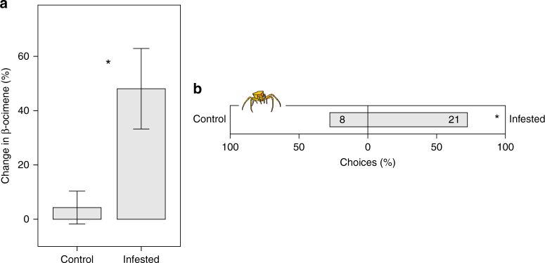 Tritrophic interaction between Biscutella laevigata , florivores and crab spiders. a Inducibility of β-ocimene in florivore-infested and control plants ( N = 68). Each bar represents a mean ± s.e., significant differences between treatments are indicated by an asterisk. b Dual-choice behavioral assays testing the preference of crab spiders for florivore infested B. laevigata plants against a control plants. Numbers in bars are the absolute number of choices of inflorescences. Binomial test: ns: P > 0.05, * P