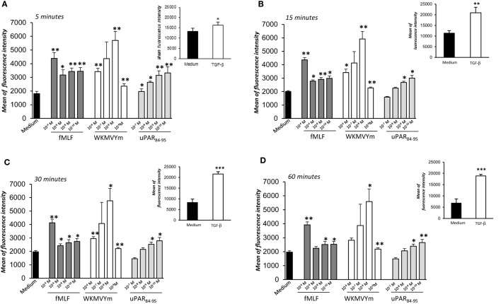Effects of N -Formyl- l -methionyl- l -leucyl- l -phenylalanine (fMLF), WKYMVm peptide, and uPAR 84–95 on reactive oxygen species (ROS) production in BJ cells. Cells were plated in a 96-well plate and treated with DCHF-DA. At the end of incubation, cells were treated with medium alone (black columns), fMLF (dark gray columns), WKYMVm peptide (white columns), and uPAR 84–95 peptide (light gray columns). ROS release was measured as dichlorofluorescein (DCF) fluorescence intensity at 5, 15, 30, and 60 min (A–D) . Results are expressed as mean fluorescence intensity of DCHF-DA-loaded cells. DCHF-DA-loaded unstimulated cells and TGF-β stimulated cells were examined in parallel, as controls, and are shown in insets. Values are the mean ± SEM of three experiments performed in triplicate. * p