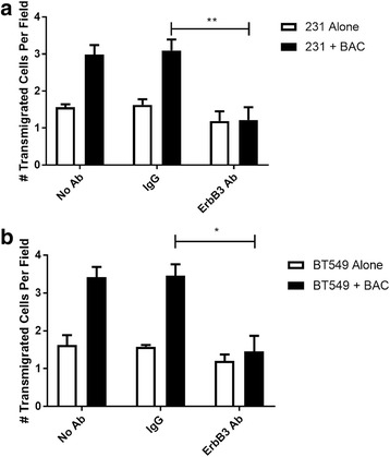 Blocking ErbB3 inhibits macrophage-induced transendothelial migration . a MDA-MB 231 cells were placed in transwells coated with Matrigel and endothelial cells, either alone (231 Alone) or in the presence of macrophages (231 + BAC), and left untreated (No Ab) or with either an IgG isotype control (IgG) or ErbB3 blocking antibody (ErbB3). Transendothelial migration was measured after 24 h. Results are shown as the mean and SEM of the number of tumor cells crossing the endothelial layer per field. N = 4; ** p