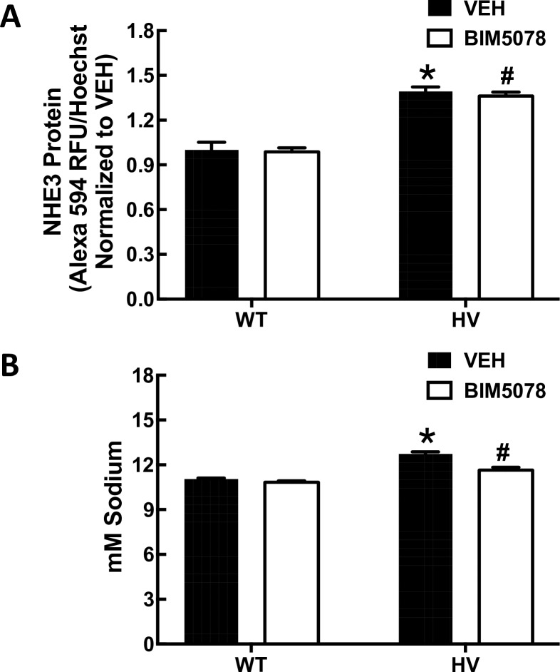 Effect of HNF4A inhibitors on basal expression of NHE3, PAT1 and Na + ,K + /ATPase in hRPTCs. A) NHE3 protein expression Basal NHE3 protein expression is greater in HV than WT SLC4A5 hRPTCs (N = 3, *P