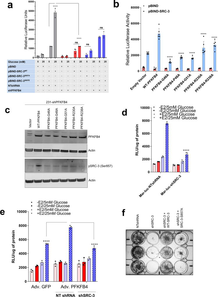 Growth defect due to loss of SRC-3 or PFKFB4 is rescued by exogenous purines a , Expression of metabolic enzymes transketolase (TKT), xanthine dehydrogenase (XDH), adenosine monophosphate dehydrogenase 1 (AMPD1) and SRC-3 in MDA-MB-231 cells expressing shRNA targeting control-shNT, shSRC-3-21 or re-expression of shRNA –resistant wildtype SRC-3 protein in SRC-3 depleted cells (shSRC-3-21+WT-SRC-3). [Mean ± s.d., n =4 biological cell samples, two-way ANOVA with Tukey's Multiple comparisons test]. b , Relative proliferation of MDA-MB-231 expressing shRNA targeting SRC-3 (shSRC-3-1 and shSRC-3-2) or NT after treatment with siRNAs targeting luciferase (siLuc) as control or PFKFB4 under conditions indicated. [Mean ± s.d., n =6 samples from biologically independent experiments, two-way ANOVA with Tukey's Multiple comparisons test, **** P
