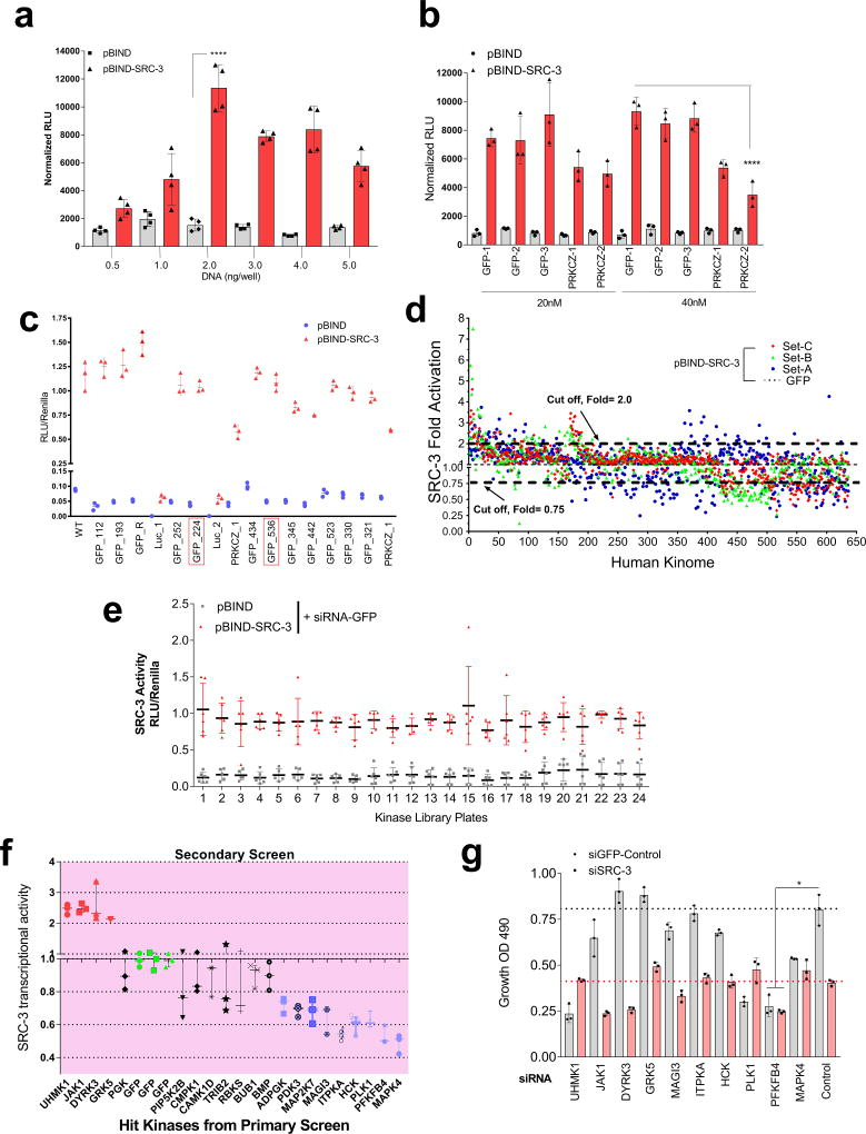 Kinome-wide screen identified potential kinases regulating SRC-3 intrinsic transcriptional activity a , HeLa cells expressing varying concentrations of pBIND or pBIND-SRC-3 construct were used to measure SRC-3 activity. [Mean ± s.d., n =4 biologically independent samples, * P