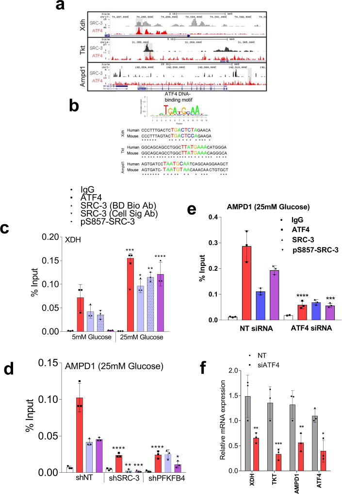 Ser-857 phosphorylation enhances SRC-3 transcriptional activity a , Relative luciferase activity (RLU) showing the activity of SRC-3 WT , SRC-3 S857A and SRC-3 S857E in MDA-MB-231 cells transduced with lentivirus expressing NTshRNA or shPFKFB4 cultured in presence of 5mM or 25mM glucose. [Mean ± s.d., n =3 biological cell samples, two-way ANOVA with Tukey's Multiple comparisons test, * P