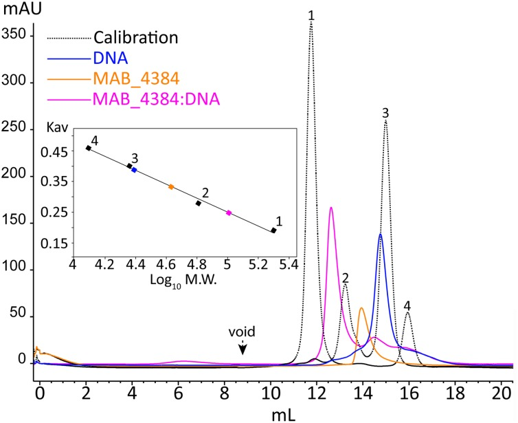 Oligomerization of MAB_4384 and the MAB_4384:DNA complex in solution. The oligomeric states of MAB_4384 alone or complexed to its DNA target were determined by size exclusion chromatography. The elution profile of the proteins, used for the calibration is displayed as a dashed black line. Calibration was established using β-amylase (200 kDa) (1), bovine serum albumin (66 kDa) (2), carbonic anhydrase (29 kDa) (3), and cytochrome C (12.4 kDa) (4), eluting with estimated volumes of 11.7, 13.2, 14.9, 15.9 mL, respectively. The void volume was determined with the elution volume (8.8 mL) of dextran blue. MAB_4384 (dimer) was at a concentration of 3.9 mg/mL. The elution profiles of MAB_4384 dimer, DNA target and MAB_4384 bound to the DNA target are shown in orange, blue, and pink and their respective elution peaks were at 13.9, 14.7, and 12.6 mL. K av indicates the partition coefficient.