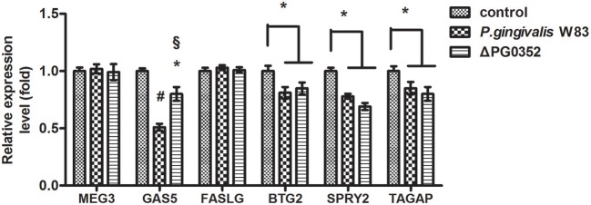 The expression of lncRNA MEG3, GAS5, FASLG, BTG2, SPRY2 , and TAGAP genes after macrophages stimulated by P. gingivalis W83 and ΔPG0352. * P