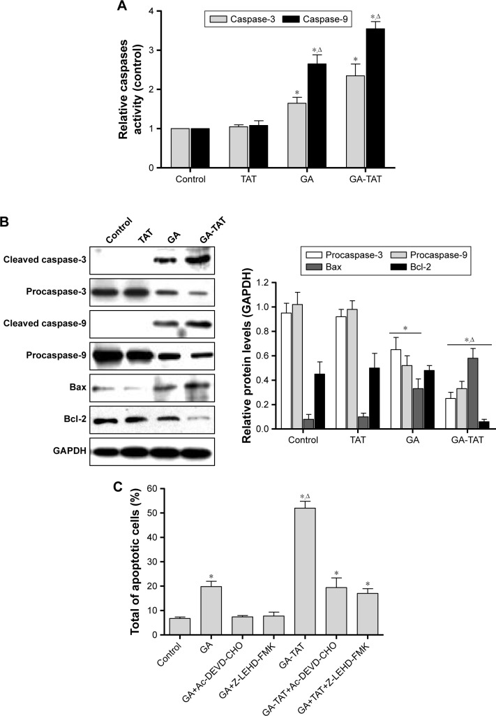 Effects of GA-TAT on caspase-3 and caspase-9 activation in EJ cells. EJ cells were incubated with 1.0 μM TAT, GA, or GA-TAT for 24 h; ( A ) the activities of caspase-3 and caspase-9 were determined using caspase-3 and caspase-9 assay kits, respectively; and ( B ) Western blotting analysis of caspase-3 (processing), caspase-9 (processing), Bcl-2, and Bax was conducted. GAPDH was used as a loading control. ( C ) EJ cells were incubated with 1.0 μM TAT, GA, or GA-TAT for 24 h with or without 20 μM Ac-DEVD-CHO (caspase-3 inhibitor) or Z-LEHD-FMK (caspase-3 inhibitor); the percentage of apoptotic cells was detected by Annexin V-FITC and PI staining flow cytometry. * P