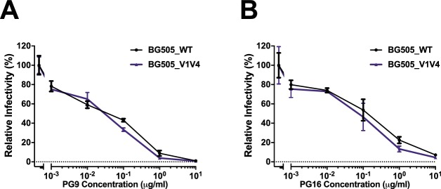 Dually tagged HIV-1 BG505 antibodies are neutralized by trimer specific antibodies. Neutralization of HIV-1 BG505_WT (black) and dually labeled BG505_V1Q3_V4A1 (purple) by the broadly neutralizing antibodies ( A ) PG9 and ( B ) PG16. X-axis depicts increasing concentration of antibodies (μg/ml) and the y-axis shows the relative infectivity compared to control in the absence of ligands. Infectivity was measured using the Gaussia Luciferase assay.