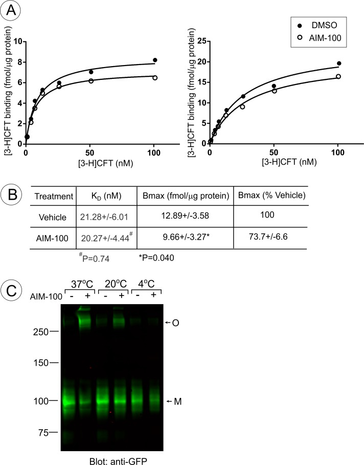 AIM-100 non-competitively inhibits <t>CFT</t> binding. ( A and B ) PAE/YFP-DAT cells were incubated with the range of <t>[3-H]CFT</t> concentrations in F12 medium with DMSO (Veh) or 20 µM AIM-100 at 20°C for 30 min as described in 'Methods'. ( A ) Examples of the concentration-dependence plots of [3-H]CFT binding. ( B ) Mean values of K D and Bmax (±S.E.M.) were determined in five independent experiments exemplified in ( A ). P values were calculated for 'AIM-100' versus 'vehicle' using paired two-tailed t-test. ( C ) PAE/YFP-DAT cells were incubated with vehicle (DMSO) or 20 µM AIM-100 for 2 hr at 4°C, 20°C or 37°C, lysed, and YFP-DAT was detected by blotting with the GFP antibody. M , monomers; O , oligomers.