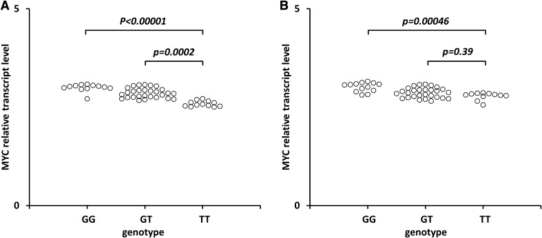 Effect of the rs6983267 SNP on MYC transcript levels in cancerous cervical tissues ( a ) and non-cancerous tissues ( b ). Frozen tissue was homogenized, followed by total RNA isolation. Quantitative analyses of MYC transcript levels were performed by qRT-PCR using the SYBR Green I system. The quantity of MYC transcript levels in each sample was standardized by the geometric mean of references using HMBS and B2M cDNA levels. Kruskal–Wallis test with a Dunn's post hoc