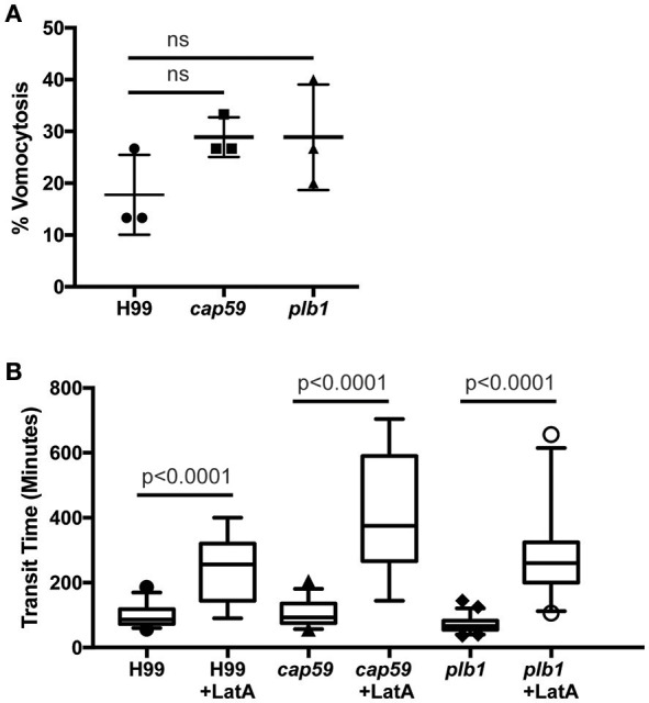 Exocytosis and vomocytosis of C. neoformans cap59 and plb1 mutants are indistinguishable from wild type H99. (A) Quantification of the percentage of non-constitutive exocytosis of C. neoformans mutants from wild-type Ax2 D. discoideum treated with latrunculin A from three independent 12 h time lapses. Total of 45 phagosomes were analyzed for wild type H99, 90 for cap59 and 90 for plb1 . P -values are Fisher's exact test. (B) Transit times of C. neoformans H99 wild type, mutant cap59 and plb1 . Phagosomes analyzed the same as (A) . P -values for between cryptococcal strain significance tests are non-significant in all cases. P -values are Mann-Whitney test.