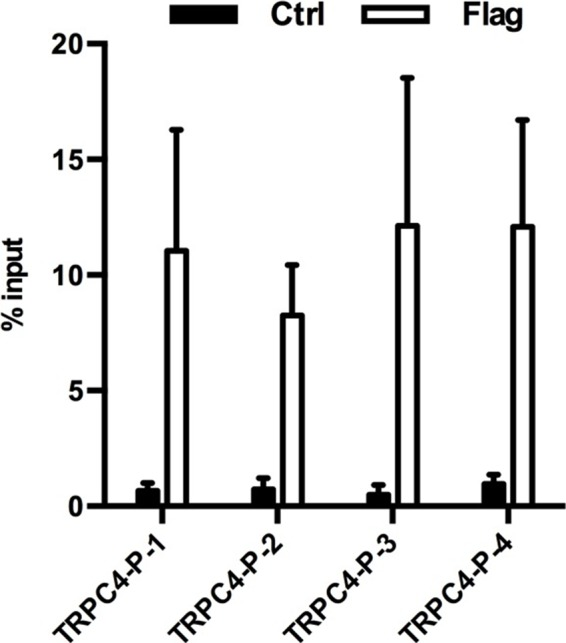 ChIP-qPCR analysis of MeCP2 occupancy on the promoter of the TrpC4 gene in primary mouse astrocytes isolated from either Mecp2-Flag mice (Flag) or control mice (ctrl). 4 pairs of primers (TRPC4-P-1 to −4) were used to cover the TrpC4 promoter. MeCP2 binding signal from the ChIP samples was normalize to signal from the input samples. The bar graphs in this figure show the mean ±s.e.m.