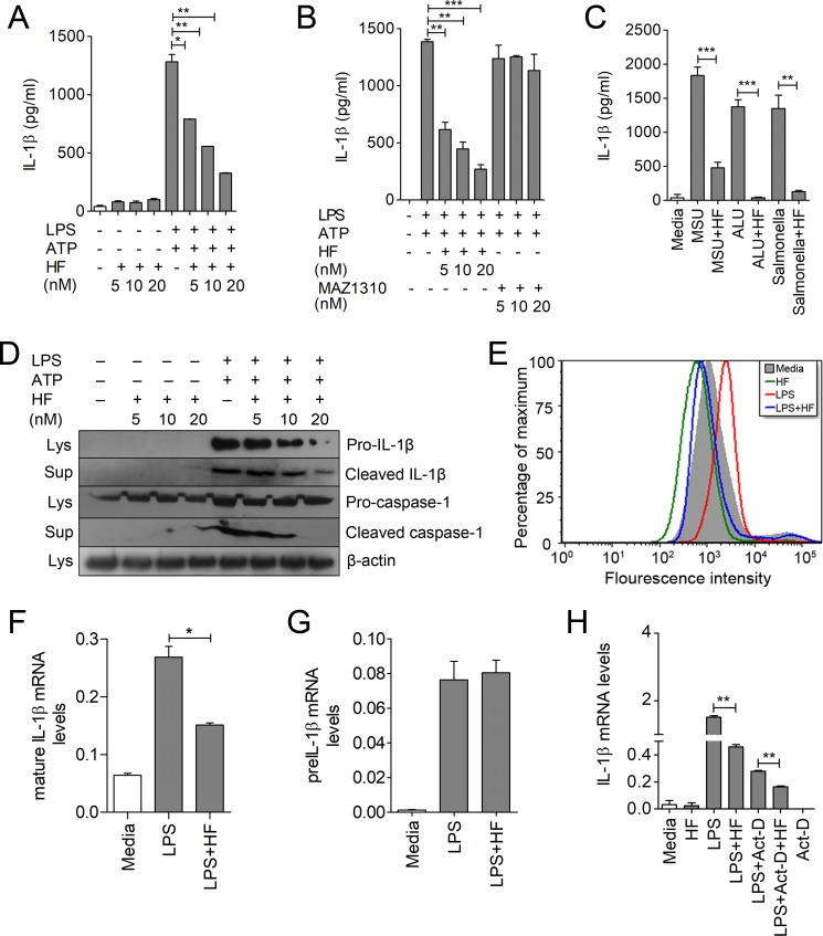 HF ameliorates LPS-induced production of <t>IL-1β</t> in macrophages by affecting mRNA stability and processing of mature IL-1β. (A–B) IL-1β production from LPS (500 ng/ml)-primed or -unprimed BMDMs treated with different concentrations of HF or MAZ1310 (control) for 6 h. ATP (5 mM) was added to the LPS-stimulated macrophage cultures for 30 min at the end of time point ( S1 Data ). Statistical significance was determined by student t test. * P ≤ 0.05, ** P ≤ 0.005, *** P ≤ 0.0005. (C) IL-1β production from LPS-primed macrophages stimulated with MSU (150 ug/ml), or ALU (200 ug/ml) for 6 h, or infected with S . typhimurium (MOI 10) in presence or absence of HF ( S1 Data ). (D) IL-1β and caspase-1 (pro and active) expression by immunoblot analysis from LPS-primed BMDMs treated with HF as indicated; β-actin was used as loading control. (E) ROS levels detected by CM-H2DCFDA staining in macrophages treated with HF or LPS plus HF. (F, G) qRT-PCR analysis of mature IL-1β and pre–IL-1β mRNA levels in J774A.1 cells stimulated with LPS or LPS plus HF ( S1 Data ). (H) Analysis of IL-1β mRNA levels by qRT-PCR in LPS-primed macrophages treated with Act-D for 2 h followed by HF treatment for an additional 2 h ( S1 Data ). * P ≤ 0.05, ** P ≤ 0.005, *** P ≤ 0.0005 were considered statistically significant. Data are representative of 1 of 3–4 independent experiments. Act-D, actinomycin-D; ALU, aluminum hydroxide; BMDM, bone marrow–derived macrophage; HF, Halofuginone; IL-1β, interleukin 1β; LPS, lipopolysaccharide; Lys., cell lysates; MOI, multiplicity of infection; MSU, monosodium urate; qRT-PCR, quantitative reverse transcription PCR; ROS, reactive oxygen species; Sup., culture supernatant.