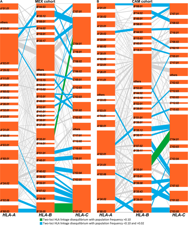 HLA class I haplotype structures and linkage disequilibrium in the MEX (panel A) and CAM (panel B) cohorts. HLA loci are stacked vertically, with each orange tile representing a specific HLA subtype, and with segments connecting linked alleles on adjacent loci. The height of each tile and the thickness of each segment correspond to HLA allele and haplotype frequencies, respectively. The most frequent HLA allele pairs (two-loci) found to be in linkage disequilibrium are highlighted in green (PF > 0.10) and blue (PF