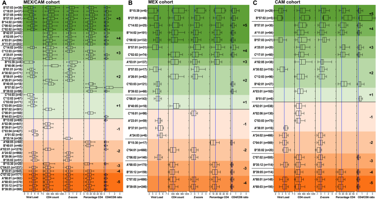 <t>HLA-HIV</t> associations in Mesoamerican cohorts using 5 HIV clinical parameters (univariable analysis). Associations between the expression of HLA <t>class</t> I alleles and 5 HIV clinical parameters (pVL, CD4 count, Z-score, CD4% and CD4/CD8 ratio) were investigated for alleles with frequency equal or greater than 5 in HIV-1 clade B-infected ART-naïve individuals from the pooled MEX/CAM cohort ( A ), only in MEX cohort ( B ) or only in CAM cohort ( C ). Associations were evaluated using the Mann-Whitney U test and multiple tests were addressed using q-values. Boxplots of only significant (p