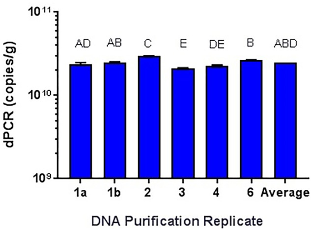 Qiagen DNeasy replicate isolations of DNA from NCFM overnight cells not treated with PMA. Columns with differing letter are significantly different from each other.