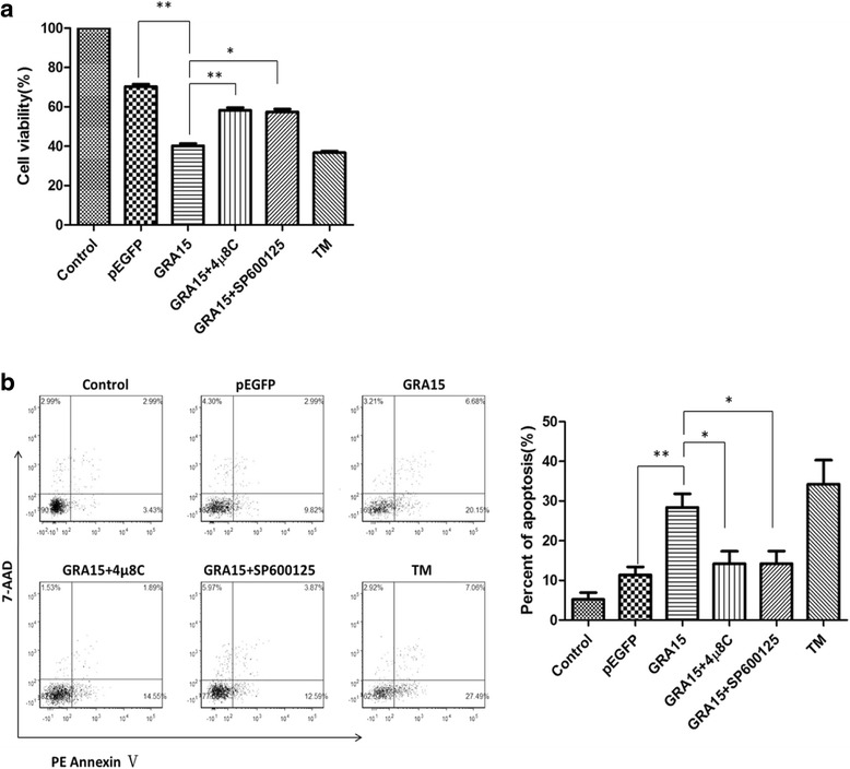 Effects of IRE1α inhibitor 4μ8C and JNK inhibitor SP6000125 on loss of cell viability and apoptosis of pEGFP-GRA15 II -transfected cells. Choriocarcinoma JEG-3 cells were transfected with either the empty vector (pEGFP, encoding enhanced green fluorescent protein) or pEGFP-GRA15 II for 24 h. Tunicamycin (TM) treated (1 μM, 24 h) cells served as the control. Cells were treated with either 4μ8C (100 nM, 12 h) or SP6000125 (20 μM, 12 h) 12 h after pEGFP-GRA15 II transfection. a Cell viability was measured using the MTS (3-[4,5-dimethylthiazol-2-yl]-5-[3-carboxymethoxyphenyl]-2-[4-sulfophenyl]-2H-tetrazolium) assay. b Cell apoptosis was determined by the phycoerythrin-annexin V/7-AAD flow cytometry assay. * P
