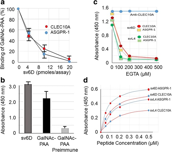 sv6D as a mimetic of GalNAc. a Inhibition by sv6D of binding of multivalent GalNAc-PAA (GlycoTech Corp., Frederick, MD) to recombinant rat CLEC10A and human ASGPR-1. The reaction mixture included approximately 200 pmoles of biotinylated GalNc-PAA and increasing concentrations of peptide. The figure includes values ± S.D. from 3 independent experiments. b Biotinylated sv6D or GalNAc-PAA were incubated with rabbit antiserum raised against the 6D sequence (NQHTPR) conjugated to KLH. Binding was detected with streptavidin-peroxidase conjugate. Similar data were obtained in 2 experiments. c Inhibition by EGTA of binding of sv6D (red, yellow) or svL4 (dark green, light green) to CLEC10A and ASGPR-1, respectively. EGTA (1 mM) was added to the final concentrations indicated to assays. Retention of bound CLEC10A was determined by incubation with biotinylated anti-CLEC10A (goat IgG, R D Systems) and detection with streptavidin-peroxidase conjugate (blue). Similar data were obtained in 3 experiments. d Binding of svL4 and sv6D to human recombinant CLEC10A and ASGPR-1 as a function of concentration of peptide in the assay. The figure is representative of 4 separate assays. K D values ± S.D. from reciprocal plots of these data are provided in the text