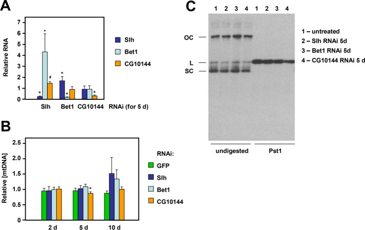 Slh, Bet1, or CG10144 knockdown does not affect mtDNA copy number, topology, or integrity. (A) Relative RNA levels of the indicated genes, normalized against RpL32 RNA and then renormalized against the values for untreated S2 cells, and (B) relative mtDNA copy number (based on qPCR), also normalized against the values for untreated S2 cells. Means ± SD, significant differences from control cells (Student's  t  test with Bonferroni correction,  n  ≥ 4 biological replicates) denoted by * ( p