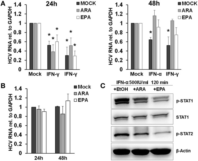 Polyunsaturated fatty acids modulate extracellular vesicle (EV)-mediated innate antiviral immunity. (A) THP-1 macrophages were treated pretreated with mock (black bar), arachidonic acid (ARA) (gray bar), and eicosapentaenoic acid (EPA) (white bar) for 24 h (left) and 48 h (right), respectively. Then, EVs were isolated from conditioned supernatants 24 h after pulsation with mock, IFN-α (500 IU/ml), or IFN-γ (25 ng/ml) for 1 h, respectively. Purified EVs containing 100 µg of protein were transferred to Huh-7.5 hepatoma cells harboring subgenomic hepatitis C virus (HCV) replicons. HCV mRNA levels were quantified by Taqman real-time PCR (RT-PCR) after 96 h. Mean and SEM of three biological replicates are shown. (B) Huh-7.5 hepatoma cells harboring subgenomic HCV replicons were exposed to mock (black bar), ARA (5 µg/ml, gray bar), or EPA (5 µg/ml, white bar) for 24 and 48 h, and HCV mRNA levels were quantified by Taqman RT-PCR. Mean and SEM of three biological replicates are shown. (C) Western blot analysis of p-STAT1 and p-STAT2 in cell lysates of THP-1 cells were treated with mock (EtOH), ARA (5 µg/ml), or EPA (5 µg/ml) for 48 h before stimulation with IFN-α (500 IU/ml) for 120 min (* P