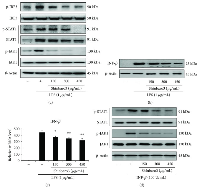 Effects of Shinbaro3 on the IRF3/STAT1 signalling pathway in LPS-stimulated RAW 264.7 cells. RAW 264.7 cells were treated with LPS (1 μ g/mL) and Shinbaro3 (150, 300, and 450 μ g/mL) for 4 h. The expression levels of (a) IRF3, STAT1, JAK1, and their phosphorylated forms were detected with specific antibodies. β -Actin was used as an internal control. The data are representative of three separate experiments. (b) Protein expression of INF- β was assessed in RAW 264.7 cells under the above condition. (c) RAW 264.7 cells were treated with LPS (1 μ g/mL) and Shinbaro3 (150, 300, and 450 μ g/mL) for 6 h. Expression of IFN- β was investigated with real-time RT-PCR as described in Materials and Methods. (d) RAW 264.7 cells were stimulated with Shinbaro3 (150, 300, and 450 μ g/mL) in presence of IFN- β (100 U/mL) for 4 h. Protein expression of JAK1 and STAT1 and their phosphorylated forms were detected. The data are expressed as the mean ± SD ( n = 3). ∗ p