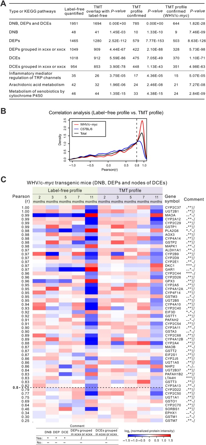 Validation of DNB, DEPs, and DCEs by TMT proteomic data. ( A ) Comparison between label-free and TMT profiles. For xcxx and xxcx, c means 'must be changed' during 3−5 months or 5−7 months, and x means 'not required to be changed'. ( B ) Density curves of PCC between label-free profile and TMT profile in WHV/c- myc transgenic mice (red), C57BL/6 control mice (blue), and both mice (black). ( C ) A heatmap shows the reproduced dynamic profiles with validated DNB, DEPs, and linked (second) nodes of DCE links (PCC > 0.8) in WHV/c- myc transgenic mice. More information of 136 nodes is listed in Supplementary Table S5 , and second nodes of the DCEs in Supplementary Figure S10 .