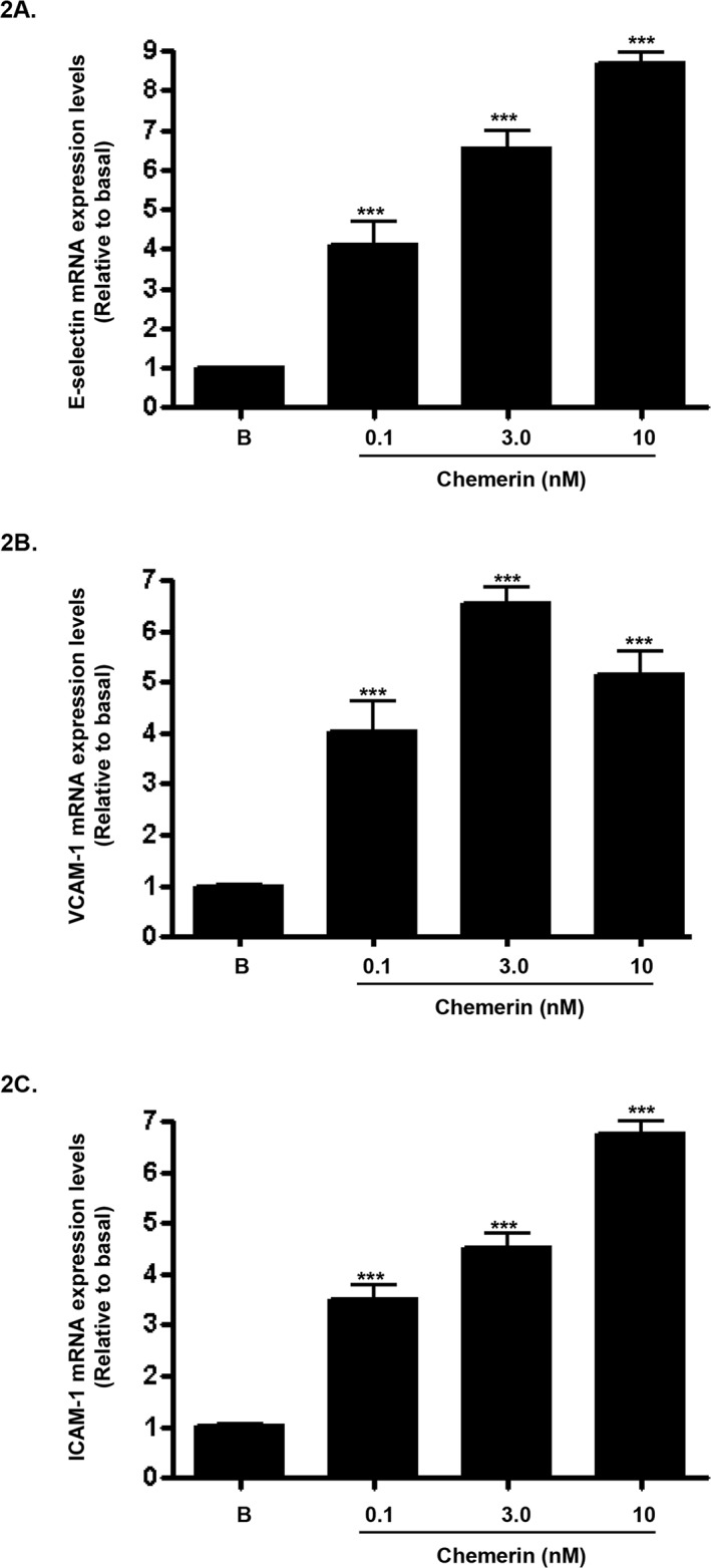 Chemerin increases endothelial cell adhesion molecules mRNA expression in HMEC-1 cells Serum starved HMEC-1 cells were treated with chemerin (0-10nM) for 4 hours. Real-time quantitative RT-PCR analyses showed that mRNA expression of cell adhesion molecules, i.e. E-selectin, VCAM-1 and ICAM-1, were significantly up-regulated by chemerin in a concentration dependent manner at 4 hours (Figures 2A-2C : *** P