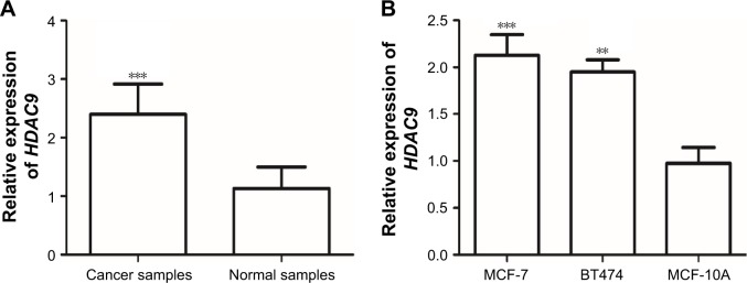 The mRNA expression of HDAC9 measured by qRT-PCR. Notes: ( A ) HDAC9 expression in breast cancer tissues and paired normal tissues. The expression of HDAC9 was higher in breast cancer tissues than that in the matched normal tissues (*** P