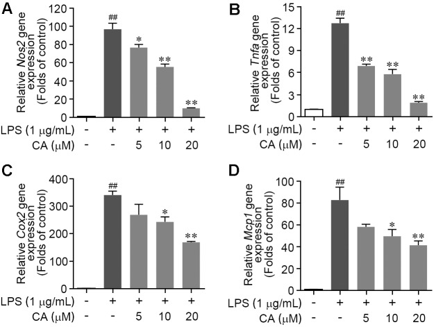 Carnosic acid down-regulated the levels of pro-inflammation gene expression in LPS-stimulated RAW264.7 cells. (A–D) Cells were treated with LPS (1 μg/ml) for 6 h with or without CA (5, 10, and 20 μM). The relative mRNA expressions of Nos2 (A) , Tnfα (B) , Cox2 (C) , and Mcp1 (D) were detected by real-time PCR analysis, respectively. Data are expressed as mean ± SEM ( n = 3). ∗ P
