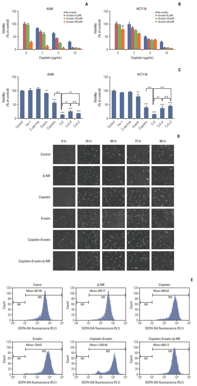 Improved anti-tumor activity was observed in combination of cisplatin and erastin. (A) A549 cells were treated with cisplatin and erastin of different concentrations as demonstrated for 48 hours. (B) HCT116 cells were treated with cisplatin and erastin of different concentrations as demonstrated for 48 hours. (C) A549 and HCT116 cells were under the treatment of cisplatin (5 μg/mL) or erastin (10 μmol/L) for 48 hours, together with z-vad-fmk (20 μmol/L) or ferrostatin-1 (Fer-1, 0.5 μmol/L), respectively. Cell viabilities were analyzed by MTT. C, cisplatin; E, erastin; F, ferrostatin-1 (Fer-1); Z, z-vad-fmk; β-ME, β-mercaptoethanol; n.s., not significant. Standard error represents three independent experiments (n=3). ** p