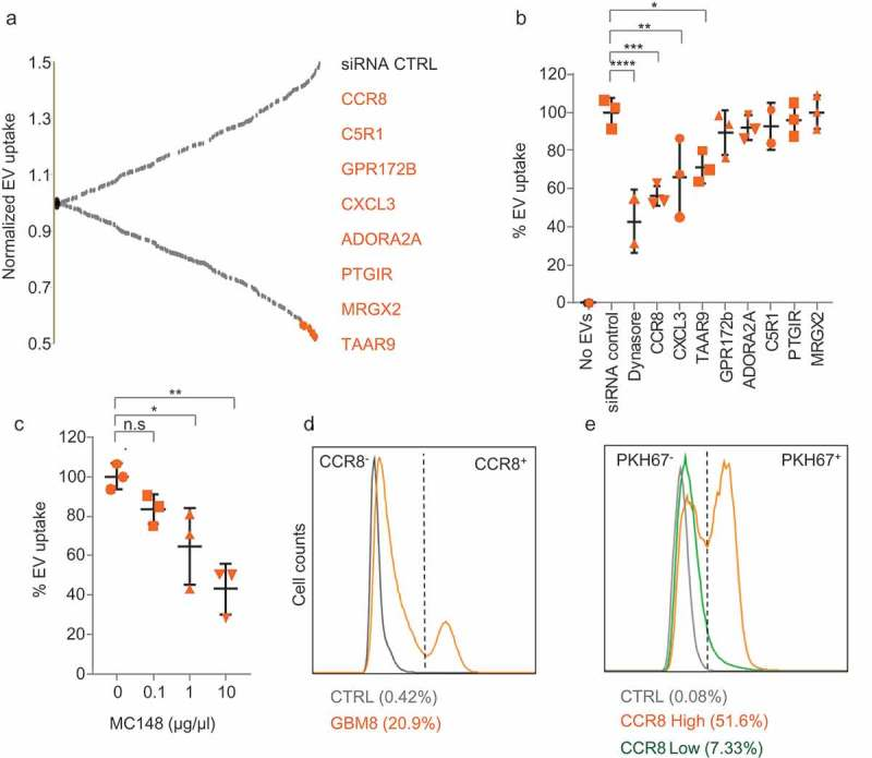 CCR8 acts as an EV receptor (a) GPCR siRNA screening result on HEK-293T cells. Normalised PKH67 fluorescence is displayed on the Y-axis, and each dot represents a siRNA against an individual GPCR Top-8 EV uptake-reducing siRNAs are highlighted in orange and indicated at the right side. (b) siRNA screening validation on GBM8 cells with an independent set of siRNAs. Normalised PKH67 fluorescence (EV uptake) is displayed on the Y-axis. Treatment of cells with Dynasore served as a control for EV uptake reduction. (c) CCR8 inhibitor MC148 reduces EV uptake in a dose-dependent fashion. (d) FACS analysis of CCR8 expression in GBM8 cells. Negative control: No anti-CCR8 primary antibody (e) PKH67 fluorescence (representative of EV uptake) of CCR8 − (green) compared to CCR8 + (orange) GBM8 cells. Negative control (grey): GBM8 cells not incubated with PKH67 EVs.