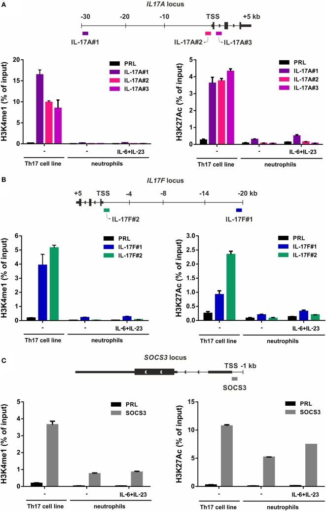 H3K4me1 or H3K27Ac levels at the IL-17A, IL-17F, and SOCS3 genomic loci of Th17 cell lines and resting/IL-6 plus IL-23-activated neutrophils. Enrichment levels of H3K4me1 (left panels) and H3K27Ac (right panels) at the IL-17A (A) , IL-17F (B) , and SOCS3 (C) genomic loci by chromatin immunoprecipitation (ChIP) analysis in human Th17 cell lines and neutrophils incubated for 1 h with or without 20 µg/ml IL-6 plus 2 µg/ml IL-23. (A–C) Schemes illustrating the positions of the designed primer pairs amplifying promoter and potential enhancer regions of IL-17A, IL-17F, and SOCS3 for ChIP analysis are depicted at the top of each panel. Coimmunoprecipitated DNA samples were expressed as percent of the total input. Panels in (A–C) depict a representative experiment out of two independent ones with similar results. Error bars represent SEs calculated from triplicate qPCR reactions.