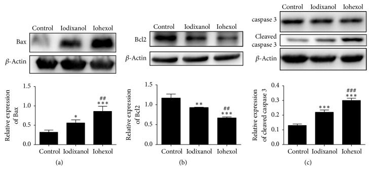 The effects of contrast media on <t>apoptosis-related</t> proteins in <t>HUVECs.</t> HUVECs were treated with 20 vol% of iodixanol or iohexol for 4 h and expression of Bcl-2 (a), Bax (b), caspase 3, and cleaved caspase-3 (c) was measured by Western blotting. These experiments were repeated at least 3 times. Data represents mean ± SD. Complete growth medium served as control. ∗ P