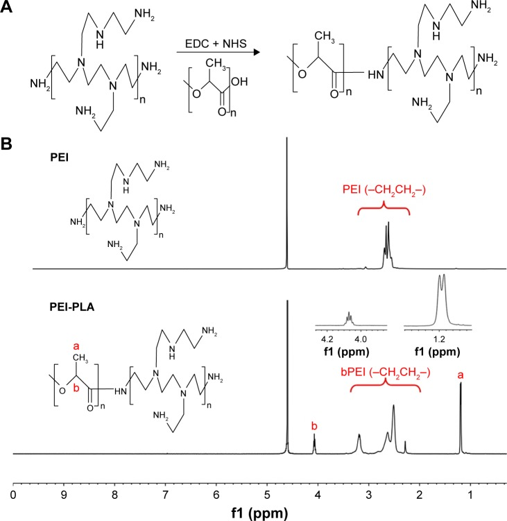 ( A ) Synthesis of the PEI-PLA. The PLA-COOH was conjugated to PEI through amide formation in the presence of EDC and NHS, obtaining the cationic amphiphilic copolymer of PEI-PLA. ( B ) 1 H-NMR spectra of PEI and PEI-PLA in D 2 O. The peak of PEI appears at around 2.6 ppm. In PEI-PLA, a new broad peak appears at 2.3–3.4 ppm, which is attributed to the protons of methylene (–CH 2 CH 2 –) in PEI. The signals at δ =1.20 ppm (a) and δ =4.08 ppm (b) correspond to −CH 3 and (–CH) proton in the PLA block of PEI-PLA, respectively. Abbreviations: PEI-PLA, polyethyleneimine-block-polylactic acid; EDC, 1-(3-dimethylaminopropyl)-3-ethylcarbodiimide hydrochloride; NHS, N -hydroxysuccinimide; NMR, nuclear magnetic resonance.