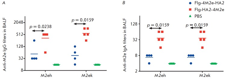 BALF antibody titers to M2e peptides in mice of experimental and control groups on day 14 post third immunization with Flg-HA2-4M2e and Flg-4M2e-HA2: A – <t>IgG;</t> B – <t>IgA</t>