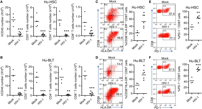 HIV-1-induced immunopathology in NRG-hu HSC and NRG-hu Thy/HSC mice. NRG-hu HSC and NRG-hu Thy/HSC mice were infected with HIV-1. Mice were sacrificed at 10 weeks postinfection. (A,B) Numbers of total human leukocytes, CD3 + T cells, CD4 T cells (CD3 + CD8 − ), and CD8 T cells (CD3 + CD8 − ) and in spleens of NRG-hu HSC (A) and NRG-hu Thy/HSC (B) mice. (C,D) Representative FACS plots and summarized data show the expression of CD38 and HLA-DR on CD8 T cells from spleen of NRG-hu HSC (C) and NRG-hu Thy/HSC (D) mice. (E,F) Representative FACS plots and summarized data show the expression of PD-1 on CD8 T cells from spleen of NRG-hu HSC (E) and NRG-hu Thy/HSC (F) mice. Shown are representative data from n = 3 (NRG-hu HSC/Mock), n = 5 (NRG-hu HSC/HIV-1), n = 3 (NRG-hu Thy/HSC/Mock), and n = 5 (NRG-hu Thy/HSC/HIV-1) mice reconstituted with HSCs/thymus from the same donor. Each dot represents one individual mouse; bars indicate mean (* P