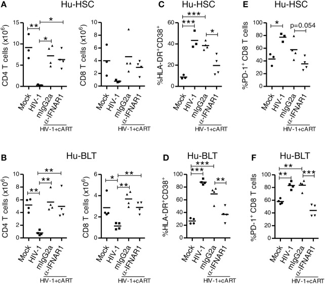 IFNAR blockade reduces activation and PD-1 expression on CD8 T cells in both HIV-1 infected NRG-hu HSC and NRG-hu Thy/HSC mice under combined antiretroviral therapy (cART). NRG-hu HSC and NRG-hu Thy/HSC mice infected with HIV-1 were treated with cART from 4 to 12 weeks postinfection (wpi). From 7 to 10 wpi, the cART-treated mice were injected with α-IFNAR1 antibody or isotype control mIgG2a antibody. Mice were sacrificed at 12 wpi. (A,B) Summarized data show numbers of human CD4 and CD8 T cells from spleens of NRG-hu HSC (A) and NRG-hu Thy/HSC (B) mice. (C,D) Summarized data show percent HLA-DR + CD38 + of CD8 T cells from spleens of NRG-hu HSC (C) and NRG-hu Thy/HSC (D) mice. (E,F) Summarized data show percent PD-1 + of CD8 T cells from spleens of NRG-hu HSC (E) and NRG-hu Thy/HSC (F) mice. Shown are representative data from n = 3 (NRG-hu HSC/Mock), n = 3 (NRG-hu HSC/HIV-1), n = 4 (NRG-hu HSC/HIV-1/cART/mIgG2a), n = 4 (NRG-hu HSC/HIV-1/cART/α-IFNAR1), n = 4 (NRG-hu Thy/HSC/Mock), n = 4 (NRG-hu Thy/HSC/HIV-1), and n = 4 (NRG-hu Thy/HSC/HIV-1/cART/mIgG2a), n = 4 (NRG-hu Thy/HSC/HIV-1/cART/α-IFNAR1) mice. Each dot represents one individual mouse; bars indicate mean (* P