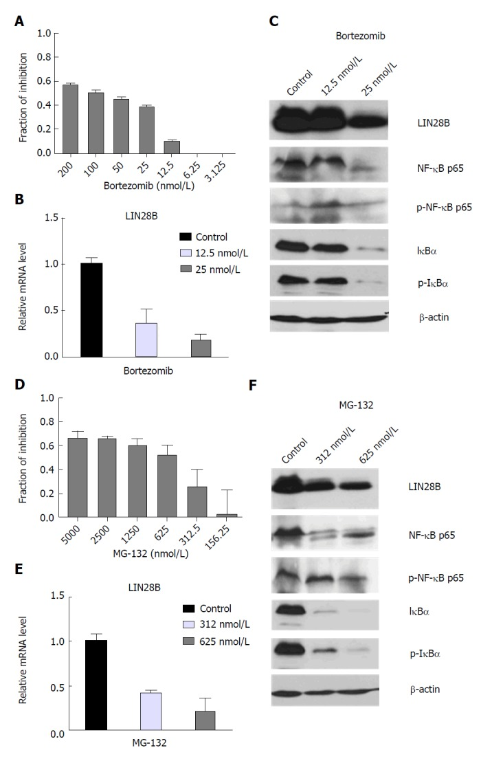 Effects of nuclear factor kappa B (NF-κB) inhibitors on acute myeloid leukemia cell viability and LIN28 mRNA and protein expression. TF-1a cells were treated with DMSO control, different doses of Bortezomib as indicated, followed by CellTiter-Glo ® Luminescent Cell Viability Assay (CTG assays) (A) or RNA extraction for qRT-PCR (B) and protein extraction for Western blot analysis (C), TF-1 cells were treated with DMSO control, different doses of MG-132 as indicated, followed by CTG assays (D) or RNA extraction for qRT-PCR (E) and protein extraction for Western blot analysis (F). For CTG assays, luminescence of each drug concentration and their controls were quantified. The relative inhibition induced by drug treatment was calculated relative to DMSO controls. For qRT-PCR analysis, the LIN28B mRNA level in DMSO control samples was set as 1 and the relative fold changes of LIN28B in drug treated samples were normalized to DMSO control samples. The experiments were triplicated ( n = 3, mean ± SD). For Western blot analysis, β-actin was used as loading control.