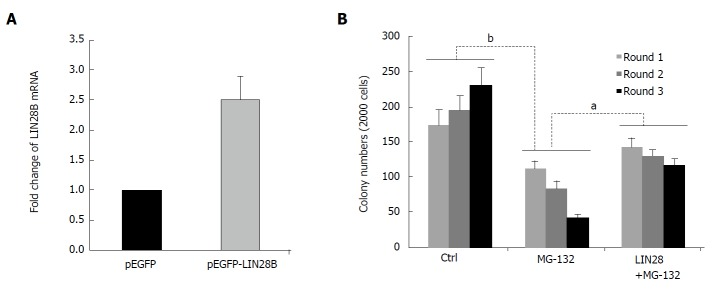 Role of LIN28B in nuclear factor kappa B (NF-B)-mediated leukemic stem cell-like properties. A: RNAs of pEGFP and pEGFP-LIN28B transfected TF-1a cells, followed by qRT-PCR comparing LIN28B transcription level. The expression of LIN28B in each sample was normalized with GAPDH respectively ( n = 3, mean ± SD); B: A total of 2000 cells from TF-1a or LIN28B overexpression cells were initially plated in methylcellulose medium containing either DMSO as control or MG-132 at 50 nmol/L, followed by another two rounds of serial replating assays. Quantification of colonies of indicated cells over 3 rounds of replating in methylcellulose medium. Bar figures represented 3 separated experiments ( n = 3, mean ± SD). a P